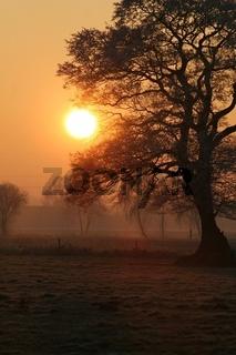 Winterlicher Baum im Gegenlicht
