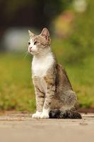 mottled domestic cat standing in the garden on pedestrian alley