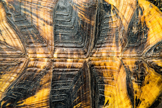 Texture of turtle shell
