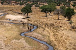 Safari Tarangire Nationalpark Tansania