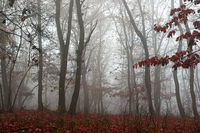 beautiful forest in misty morning