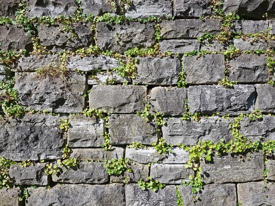 Trockenmauer mit Pflanzen