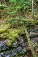 Fallen tree in a shale canyon
