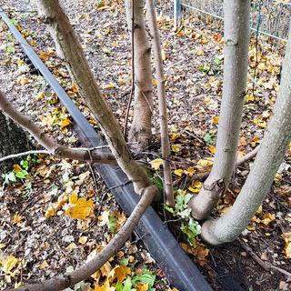 Totes Gleis und junge Bäume
