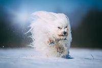 Kleiner Hund hat viel Spaß im Schnee