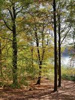 Herbstlandschaft am Liepnitzsee nördlich von Berlin