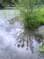 Ufer am Weissensee