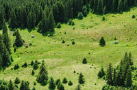 mountain forest and meadow summer landscape