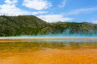 burnt forest at Grand Prismatic Spring Yellowstone