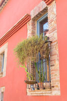 Spanish window with cacti