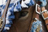 Pferdekopf - Detail