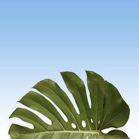 pattern of green monstera leave