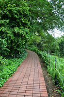 Red brick path in Singapore Botanic Garden