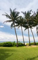Palm trees frame the ocean near Poipu