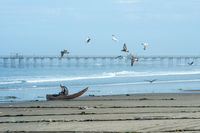 The fisherman goes to sea on a Traditional Peruvian small Reed Boats (Caballitos de Totora) in Pimentel, Peru