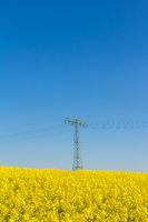 Gelbe Blüten im Rapsfeld im Frühling mit blauem Himmel und Hochspannungsmasten