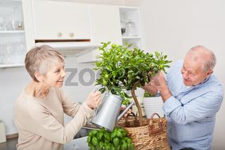 Glückliches Seniorenpaar pflegt Obstbaum