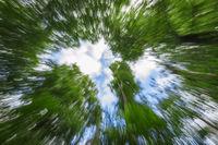 Baumkronen mit Kamera-Zoom-Effekt