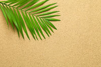 Summer Background with Green Palm Leaf
