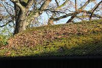 Dach mit Moos