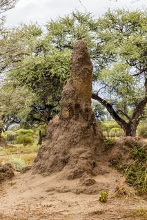Termitenhügel, termite mound