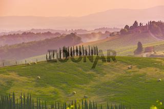 Zypressen auf den Hügeln der Crete Senesi, im Abendlicht, bei Pienza, Italien