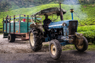 Truck on tea plantation