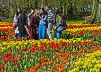 Touristen aus Asien inmitten blühender Tulpen in der Gartenanlage Keukenhof