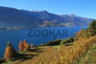 Autumn landscape at lake Walensee, Switzerland. Vineyard in Walenstadt.