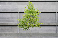 tree in front of concrete building