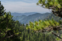 Beautiful view of the mountain peaks from pine forest. Altai Krai.