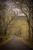 A road through a dark forest