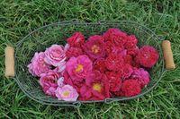 Rosenblüten in einem Korb