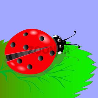 Red ladybird crawls
