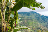 Ecuador as it is: the Andes, the sky and bananas
