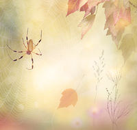 Autumn background with a spider