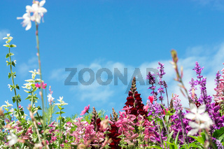 Greeting Card with colorful flower meadow, summer flowers. Pink purple.