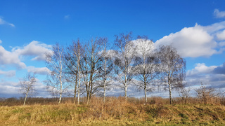 Landschaft mit Birken an einem sonnigen Wintertag im Norden von Berlin
