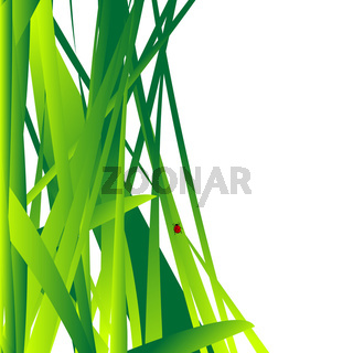 Fresh grass leaves background