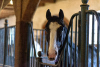horse in a stable on a farm in eastern Poland