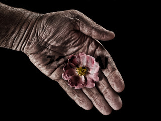 the beauty an the gardener