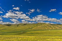 Sanfte Hügel in der mongolischen Steppe, Orchon-Tal, Mongolei