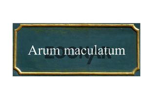 schild Arum maculatum, Aronstab, Trommelschlaegel, Zehwurz