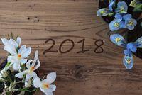 Crocus And Hyacinth, Text 2018