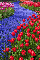 Flowers in garden Keukenhof Netherlands