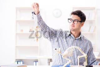 Student doctor studying animal skeleton