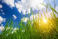 sunset and grass