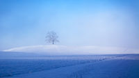 beautiful winter scenery with a tree