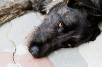 Dog resting in stone - close up photo
