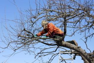 Baumschnitt, Gartenarbeit